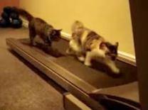 cats running